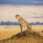 Yuk Berkunjung dan Mengenal Negara Kenya