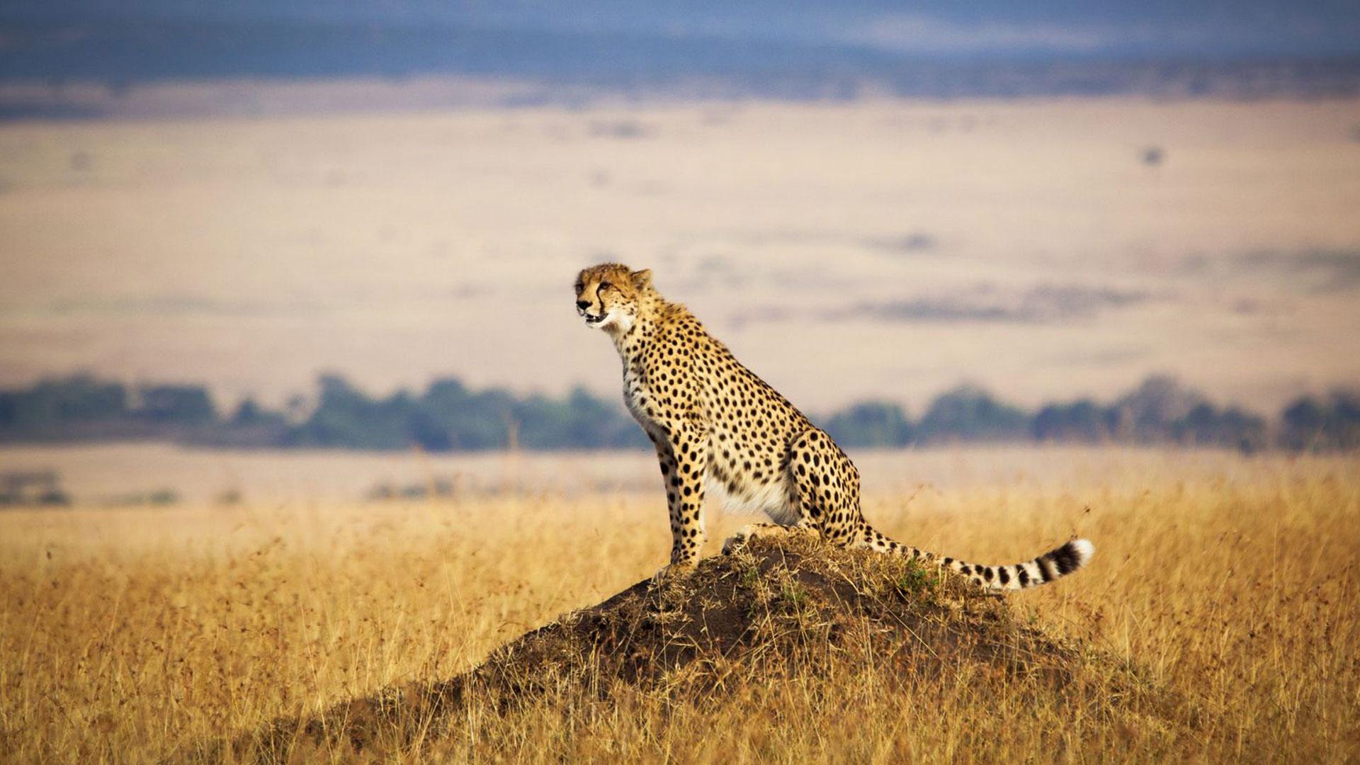 Berkunjung dan Mengenal Negara Kenya